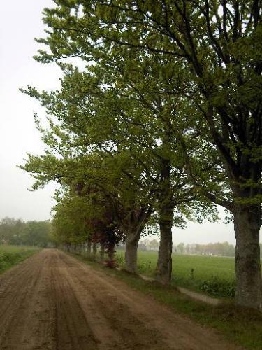 Beukenlaan Haulerweg