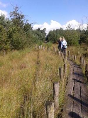 DWINGELOO  Dwingelderveld (meerdere wandelingen) Rondje Anserdennen  Lhee: paaltjespad door het moeras!!